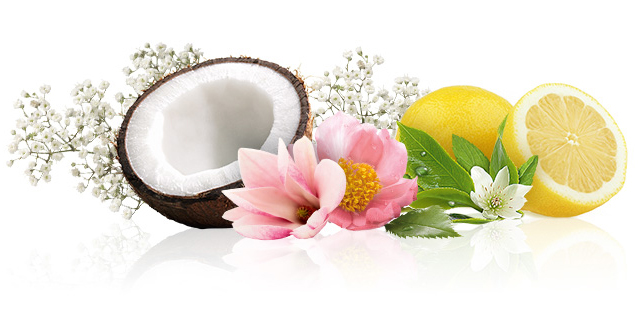 perfumaria - Termos Perfumaria