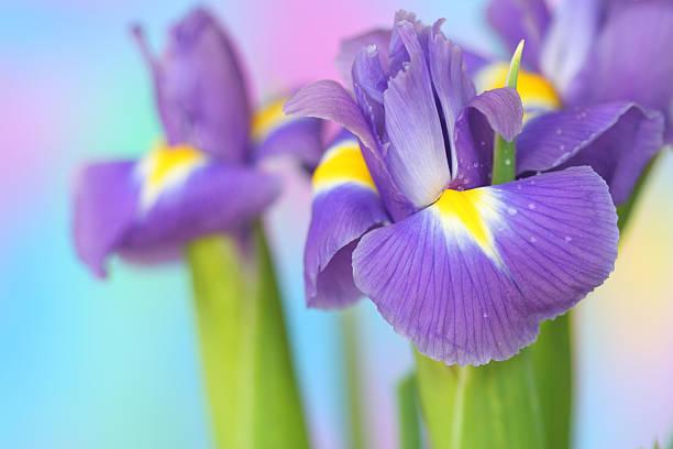 A função das flores na composição de um perfume 15