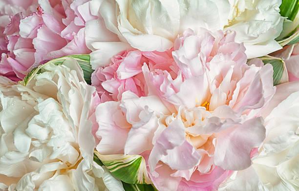 A função das flores na composição de um perfume 4