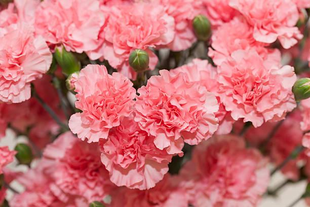 A função das flores na composição de um perfume 12